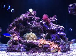 Re-Aquascaping My Reefer Nano - Aquascaping Forum - Nano-Reef.com ... Is This Aquascape Ok Aquarium Advice Forum Community Reefcleaners Rock Aquascaping Contest Live Rocks In Your Saltwater Post Your Modern Aquascape Reef Central Online There A Science To Live Rock Sanctuary 90 Gallon Build Update 9 Youtube Page 3 The Tank Show Skills 16 How Care What Makes Great Large Custom Living Coral Aquariums Nyc
