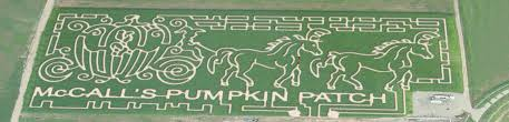 Mccalls Pumpkin Patch Albuquerque Nm by Index Of Dynamicdata Assetimages