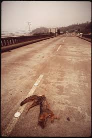 100 Road Dog Trucking FileDOG LIES DEAD ON MAJOR TRUCKING ROAD ROUTE 101 NARA 542954
