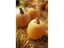 Bengtson Pumpkin Farm Lockport by Pumpkin Patches Corn Mazes Fall Festivals In The Joliet Area