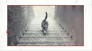 cat stairs up or photo of cat on stairs confuses the abc news