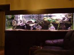 large aquarium rocks for sale frontosa and tanganyika large fish tank tropical fish site