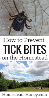 Deer Ticks On Christmas Trees by Best 25 Ticks Ideas On Pinterest Tick Bug Tick Repellant And