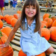 Pumpkin Patch Near Nolensville Tn by Walden Farm 20 Photos U0026 10 Reviews Attraction Farms 8653
