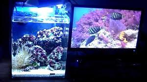 aquarium nano eau de mer aquarium nano récifal 30 litres 720 p hd