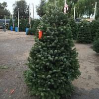 Boy Scout Christmas Tree Recycling San Diego by Sea Scouts Christmas Tree Lot Palo Alto Ca
