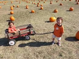 Pumpkin Patch Fort Worth Tx 2014 by Bag Of Randomess Bagofnothing Com