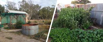 Little Desert Permaculture - The Desert Echo Thriving Backyard Food Forest 5th Year Suburban Permaculture Bill Mollison Father Of Gaenerd 101 Pri Cold Climate Archives Chickweed Patch Garden Design With Permaculture Kitchen Herb Spiral Backyard Orchard For The Yards Pinterest Orchards Australian House Garden January 2017 Archology Download Design And Ideas Gurdjieffouspenskycom Sustainable Farm Future Best 25 Ideas On Vegetable Youtube