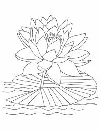 Lotus Flower Reopen And Bloom Coloring Page