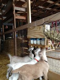 Simple Goat Bottle Holder   Farm & Garden   Pinterest   Bottle ... 124 Best Horse Barns Images On Pinterest Horse Shed Record Keeping For Goats Eden Hills Homesteading Blog Posts The Modern Day Settler Monitor Barn Plans Google Search Pole Barn 95 Chevaux Shelter Horses And Plans Hog Houses Small Farmers Journal Goat Housing Modern Dairy Shed Pdf Shelter Floor 237 Raising Goats Baby Building A Part 1 Such And Best 25 Ideas Pen 2