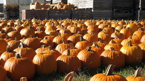 Pumpkin Patch Houston Oil Ranch by 28 Houston Area Pumpkin Patches Download Free Pumpkin Patch
