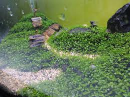 How To Plant Magic Carpets Seed Aquascape Https://youtu.be/L__ ... My Life Story Aquascape Gallery Aquascapes Pinterest Aquascaping Live 2016 Small Planted Tanks The Surreal Submarine World Of Amuse Category Archives Professional Tank Enchanted Forest By Tommy Vestlie Aquarium Design Contest Awards 100 Ideas Aquariums Fish Tanks And Vivarium Avatar Fish Tank Google Search Design Aquascape Ada Aquascaping Contest Homedesignpicturewin Award Wning Amenagementlegocom Legendary Aquarist Takashi Amano Architecture