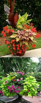 garden ideas what bulbs to plant in bulb flowering plants