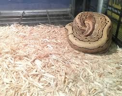 aspen bedding and ball python amphibian care