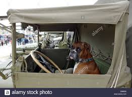100 Truck Dog Driving A Truck Dog Behind The Steering Wheel Of A Lorry Stock