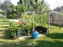 Winter Gardening Results In Florida | Florida Hillbilly 484 Best Gardening Ideas Images On Pinterest Garden Tips Best 25 Winter Greenhouse Ideas Vegetables Seed Saving Caleb Warnock 9781462113422 Amazoncom Books Small Patio Urban Backyard Slide Landscaping Designs Renaissance With Greenhouse Design Pafighting Fall Lawn Uamp Gardening The Year Round Harvest Trending Vegetable This Is What Buy Vegetables Fresh And Simple In Any Plants Home Ipirations