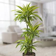Good Plants For Bathrooms Nz by Best Plants For Bathroom