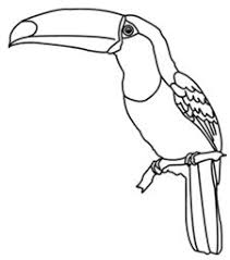 picture of toucan black and white Google Search