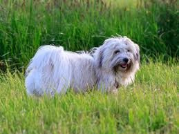 Top Dogs That Dont Shed Hair by Top 10 Dogs That Don U0027t Shed Hair Southern India Aquaculture