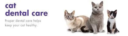 cat dental care cat dental care products petkin