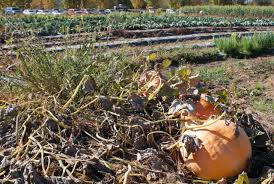 Hunter Farms Pumpkin Patch Olympia Wa by 100 Best Pumpkin Patches And Farms Near Seattle Biringer