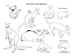 Australian Animals Coloring Pages Printable