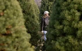 Best Christmas Tree Farms Santa Cruz by U Cut Christmas Trees Near Me Christmas Lights Decoration