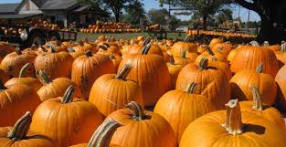Dills Pumpkin Patch Columbus Ohio by Pigeon Roost Farm