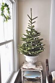 Potted Christmas Trees For Sale by 194 Best Christmas Images On Pinterest La La La Beautiful And
