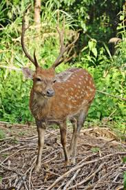 100 when do whitetails lose their antlers the best deer