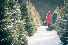 Cut Your Own Christmas Tree This Winter Explore The World With