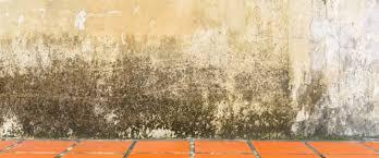 feuchte wände im keller grund für eine mietminderung
