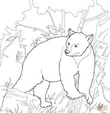 Full Size Of Coloring Pagecoloring Pages Bear Kermode Page Large Thumbnail