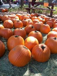 Pumpkin Patch Pasadena Area by Pumpkin Patch At Camp Mariposa This Weekend Altadenablog