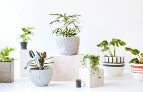 Best Plant For Bathroom by Bathroom Great Bathroom Plants 520465 1240 800 Best Plants For