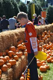 Pumpkin Patch Greenville Nc by The Great Pumpkin Fest At Carowinds 2014 043 The Mommy Times