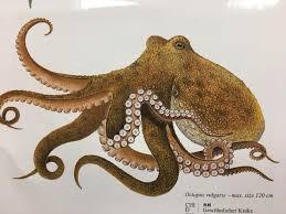 Octopus Garden Home