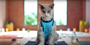 honda cat for honda s service centers are enough for pompous albert
