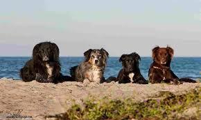 rudelurlaub die spezialisten für urlaub mit hund und mit