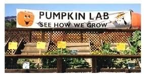 Uesugi Farms Pumpkin Patch by Uesugi Farms Pumpkin Park In Morgan Hill Ca Parent Reviews