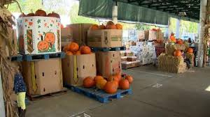 Pumpkin Patch Nashville Area by Pumpkin Patch Axs