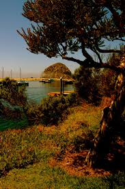 Christmas Tree Lane Ceres Ca Address by 21 Best Millerton Lake State Recreation Area Images On Pinterest