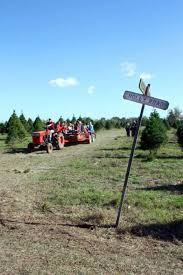 Christmas Tree Farm Near Lincoln Nh by Where To Cut Your Own Christmas Tree In The Houston Area Houston