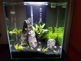 My First Aquarium And First Attempt At Aquascaping. : Aquariums Out Of Ideas How To Draw Inspiration From Others Aquascapes Aquascaping Aquarium The Art The Planted Plant Stock Photo 65827924 Shutterstock Continuity Aquascape Video Gallery By James Findley Green With River Rocks Aqua Rebell Qualifyings For 2015 Maintenance And Care Guide Outstanding Saltwater Designs 2012 Part 1 Youtube Dennerle Workshop Fish