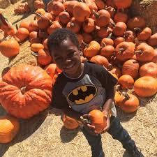 Best Pumpkin Patch Torrance by Shawn U0027s Pumpkin Patch 119 Photos U0026 47 Reviews Pumpkin Patches