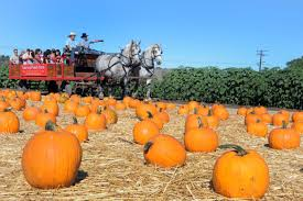 Best Pumpkin Patch Torrance by 10 Fall Activities To Go And Do In Southern California U2013 Daily News