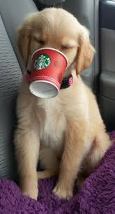 Dog Cute Starbucks Wallpaper IPhone Resolution 460x851