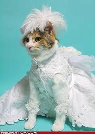 cat wedding dress cats in cat sized wedding dresses sharp dressed pets pintere