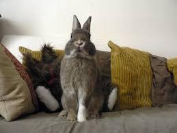 mon fait pipi sur le canapé education du lapin pipi sur le canapé marguerite et cie