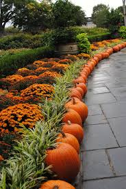 Boyd Tx Pumpkin Patch by I Love You Fall Pumpkins As Edging And A Sea Of Lovely Mums
